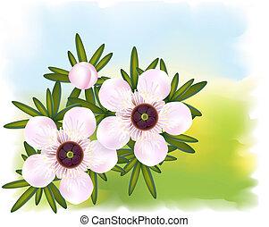 leptospermum., właśnie, herbata, leaf., drzewo, kwiaty, albo...