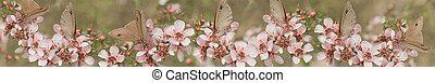 Leptospernum Flowers Australian Ban - Australian panoramic ...