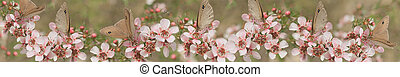 Leptospernum Flowers Australian Ban - Australian panoramic...