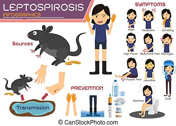 Leptospirosis infographics. Leptospirosis about symptoms and prevention. health concept vector cartoon illustration.