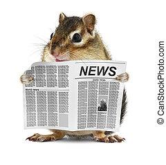 ler, engraçado, jornal, chipmunk