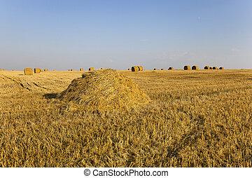 les, champ agricole