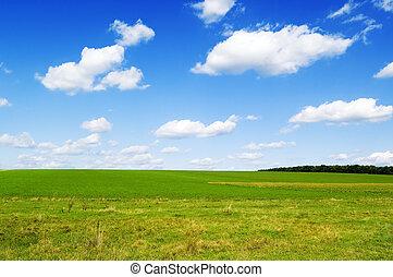 les, champ vert
