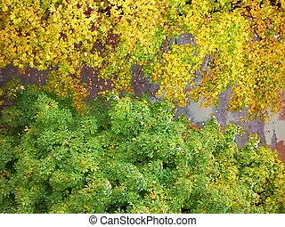 les, couleurs, de, les, autumnn.