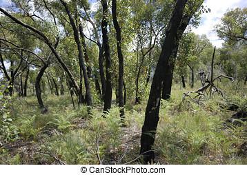 les, jeden, rok, po, křovisko vystřelit