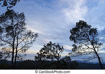 les, nature, arbre, coucher soleil