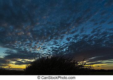 les, nature, coucher soleil
