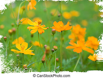 les, o, pomeranč květovat, osamocený, oproti neposkvrněný