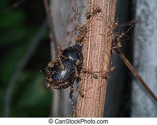 feuilles travail paume fourmis quipe ou feuilles fourmis levers de soleil d coupage. Black Bedroom Furniture Sets. Home Design Ideas