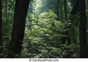 les, východ slunce
