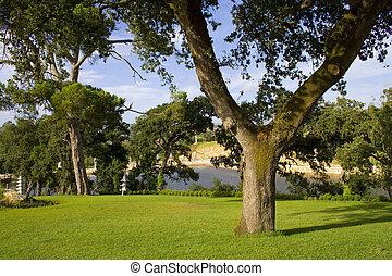 les, v, arbre