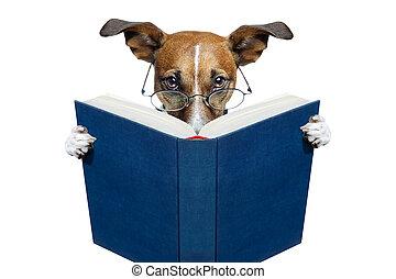 lesend buch, hund