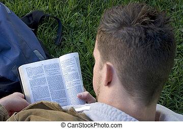 lesende , bibel