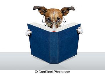 lesende, Buch, hund