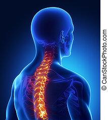 lesión, radiografía, espinazo