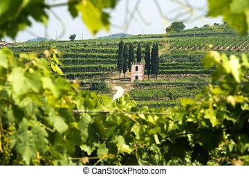Lessinia (Verona, Veneto, italy), vineyards near Soave at...