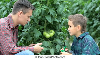 Lesson of botany - Father telling his son about tomato plant...