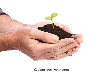 Let it grow - Hands of man with young plant