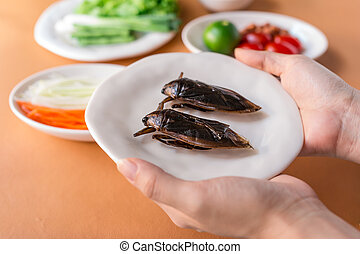 Lethocerus indicus (Giant water bug)