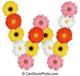 letra, alfabeto, isolado, w, flores brancas