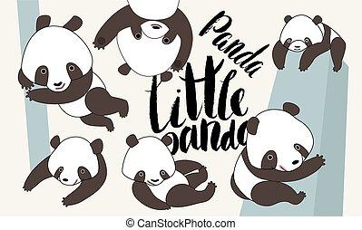 letras, conjunto, oso de oso panda, caricatura