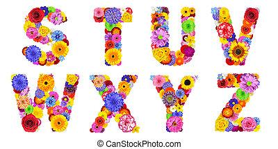 letras, y, x, alfabeto, w, -, isolado, u, t, s, floral, branca, z, v