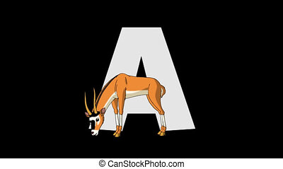 Letter A and Antelope (foreground) - Animated animal...