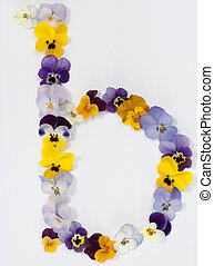 letter b alphabet made from pansy flowers