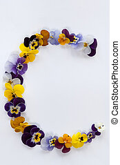 letter c alphabet made from pansy flowers