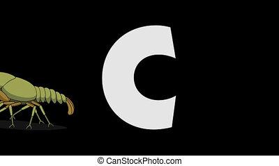 Letter C and Crayfish (background) - Animated animal English...