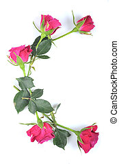 letter C maded from roses