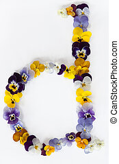 letter d alphabet made from pansy flowers