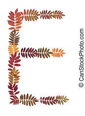 Letter E from alphabet