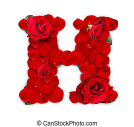 Letter H made from red roses and petals isolated on a white background