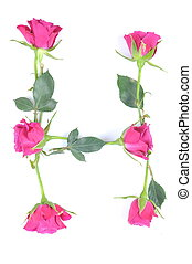 letter H maded from roses
