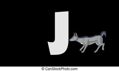Letter J and Jackal (background) - Animated animal English...