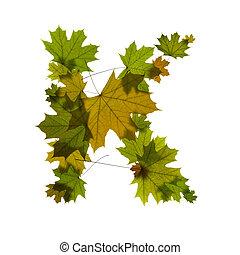 letter K from green maple leaves