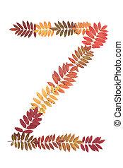Letter of the alphabet Z