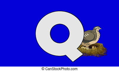 Letter Q and Quail (background) - Animated animal alphabet....