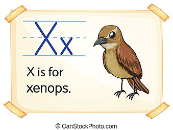 Letter X - Illustration of a flashcard with letter X