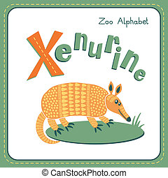 Letter X - Xenurine