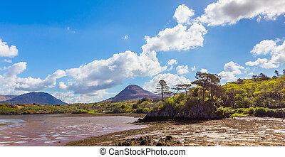 letterfrack, 島, 岩が多い, 木