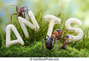 lettre, ver, fourmi, pas, mais, s, contes, !