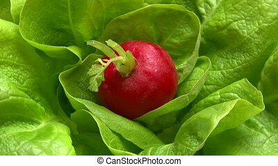 Lettuce and red radish, closeup, spin
