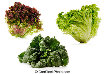 set of spinach and lettuce isolated over white background