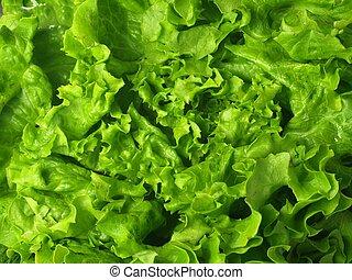 Lettuce, closeup