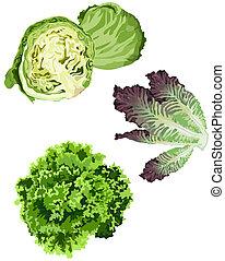 Lettuce icons on white background