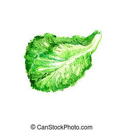 Lettuce - Watercolor Salad Leaf, Fresh Lettuce. Hand Drawn...