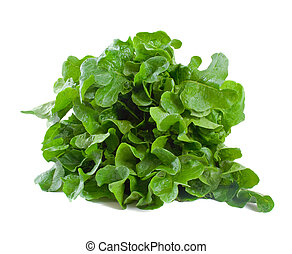 Lettuce Freshly Picked - Freshly picked lettuce isolated...