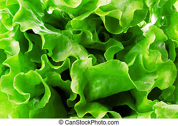 Lettuce green salad, fragment, isolated on white. Abstract back